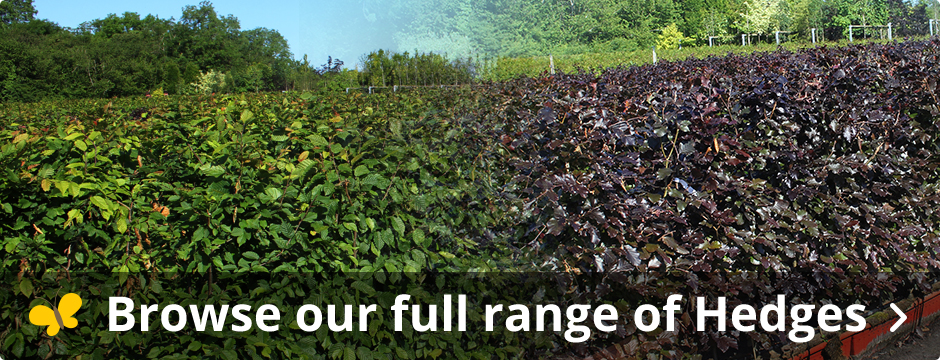 Ready Hedge Product Range
